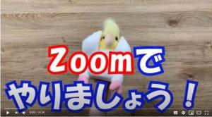 Zoomヘビーユーザーが、操作方法・メリデメをまとめてみた【動画】